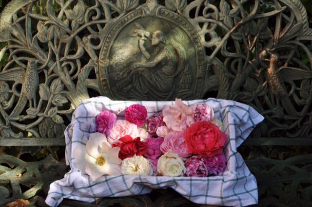 Rosenzeit im Garten von La Gioiella