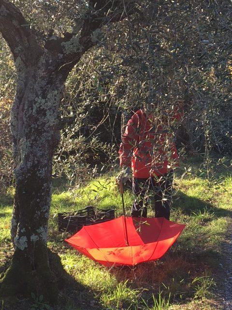 Olivenernte  27.11.-04.12.2021